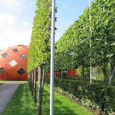 garden design garden design with skinny garden ideas perfect home
