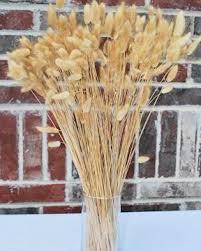 buy dried grasses buy grasses dried grasses for sale