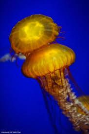the georgia aquarium atlanta ga world u0027s largest aquarium