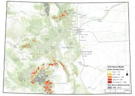 Northern Colorado Map by Aerial Survey Shows Pine Beetles Waning But Spruce Beetles