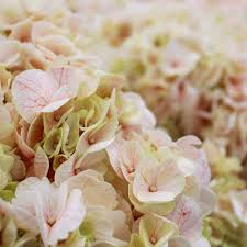 100 Flower Shops In Santa Los Angeles Flower District 622 Photos U0026 194 Reviews Florists