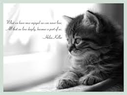 grieving loss of pet grieving and loss quotes like success