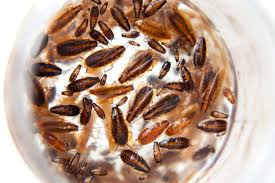Baby Roaches In Bathroom Baby Roaches Pictures 9 Simple Ways To Get Rid Of It For Good