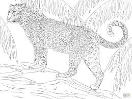 intermediate animal coloring pages kids coloring