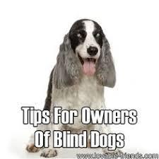 Pictures Of Blind Dogs Careful I U0027m Blind