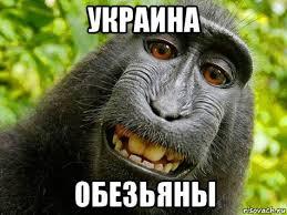Chimp Meme - create meme monkeys ukraine monkeys ukraine a monkey monkey