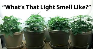 how well would a plant grow under pure yellow light how does color spectrum affect growing weed grow weed easy