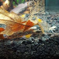 tannin camarao bolsa 2 0 aquatic botanical sler pack for