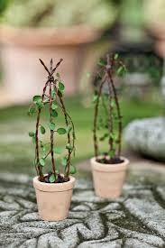 houseplant trellis jeremie mini garden wire trellis in a tiny pot mini classic
