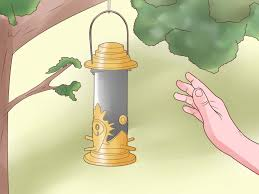 Yellow Flag With Snake How To Attract Yellow Finches 6 Steps With Pictures Wikihow