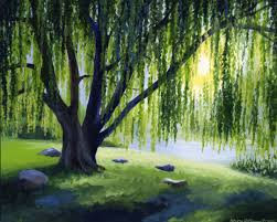 best 25 weeping willow ideas on willow tree white