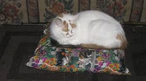 Cats In Dog Beds Alpaca Pet Beds Are Warm Dog Beds