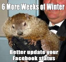 Wombat Memes - 8 groundhog day memes from punxsutawney phil