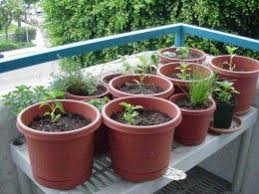 the 25 best growing vegetables in containers ideas on pinterest