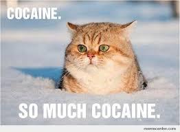 So Much Cocaine Meme - cocaine so much cocaine by ben meme center