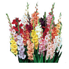 online flowers glads flowers india online flowers delivery to india glad