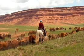 about willow creek ranch at the hole in the wall llc