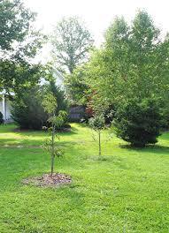 breathtaking small backyard orchard photo design inspiration