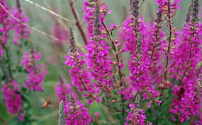 native plants list escape of the invasives top six invasive plant species in the