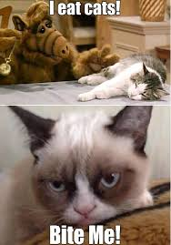 Tard The Grumpy Cat Meme - alf vs tard grumpy cat cat and meme