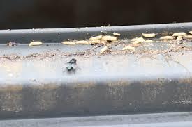 larven in der k che maden in der wohnung bekämpfen diese mittel helfen wirklich