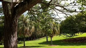 Brisbane City Botanic Gardens by Green Space Shortage Brisbane At Risk Of Becoming The Least