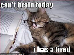 Tired Meme - can t brain today i has a tired cheezburger funny memes funny