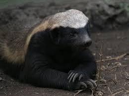 Honey Badger Meme Generator - honey badger meme generator