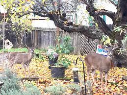 10 best deer repellents to keep deer out of the garden gardensall