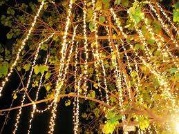 Outdoor Christmas Light Ideas Backyard Outdoor Christmas Lights Ideas For Trees U2014 Contemporary