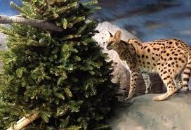 at staten island zoo christmas tree recycling is for the animals