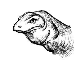 realistic picture komodo dragon coloring pages download
