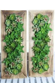 assorted succulent plants 50x20cm solid wood frame hanging plants