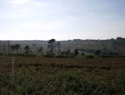 ashdown forest wikipedia