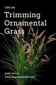 ornament tips on trimming ornamental grass beautiful ornamental