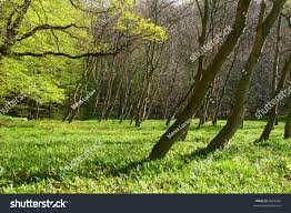 forest glade forest glade background detail summer stock photo 6602566