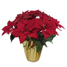 black friday 2016 home depot poinsettia home accents holiday christmas 21 in red glittered poinsettia in