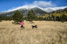 australian shepherd ultra marathon the mountain ultra trail dogs muts ultrarunning magazine
