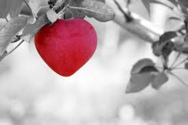 love heart candy pair wallpapers heart free pictures on pixabay