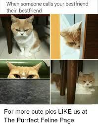 Cute Best Friend Memes - when someone calls your bestfriend their bestfriend for more cute