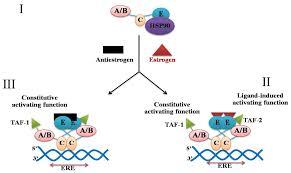 ijms free full text a dna repair brca1 estrogen receptor and
