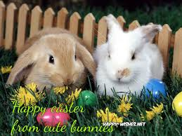 easter bunny images 2017 happy wishes