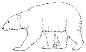 polar bear coloring pages sleeping coloringstar