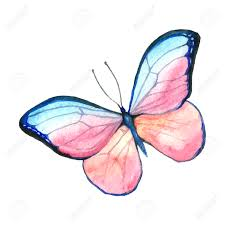 watercolor image of a butterfly on a white background isolated