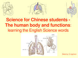 Human Anatomy Words Human Anatomy Learn And Use Science Words For Native Chinese