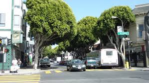 want more and healthier trees in san francisco let s invest in