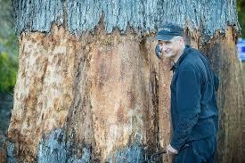 how artist elliott is scanning a tasmanian eucalypt to 3d