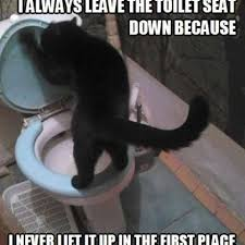 Toilet Seat Down Meme - don t give a meow cats a collection of cute and funny cat