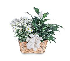 florist raleigh nc send blooming and green plant combination in raleigh nc