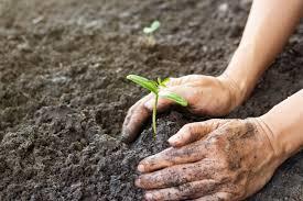 guide to backyard farming for profit backyard riches